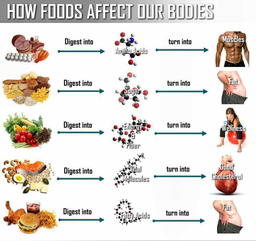 How Foods Affect Your Body