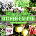 Welcome to My Kitchen Garden